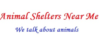 Animal Shelters Near Me -