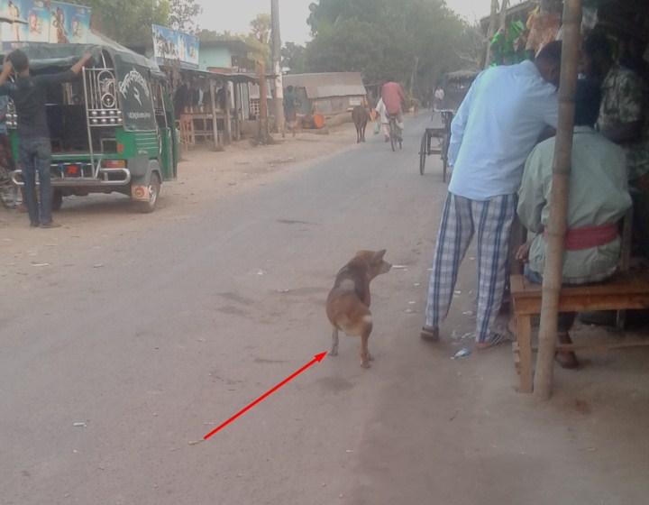 lame dog