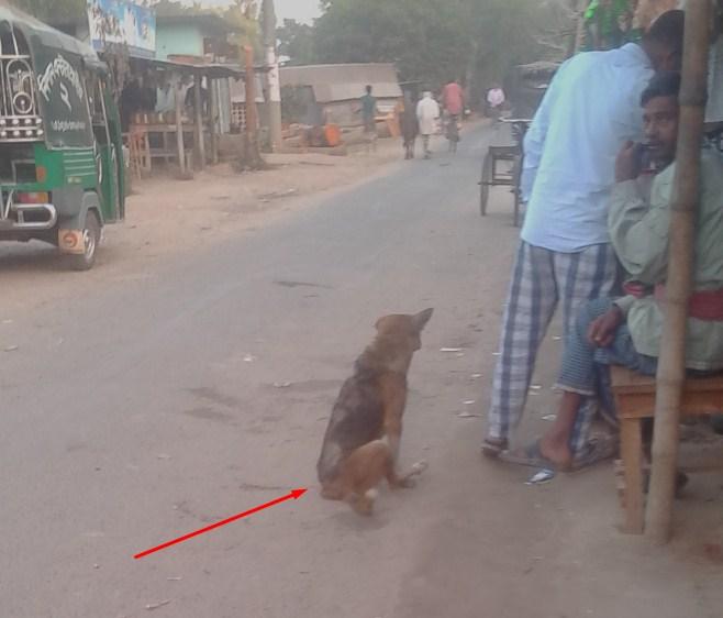 lame dog waits for food
