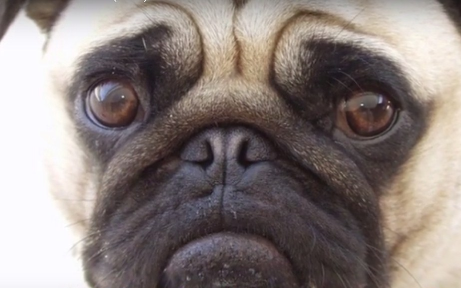 Cutest Dog Expressions Debunked