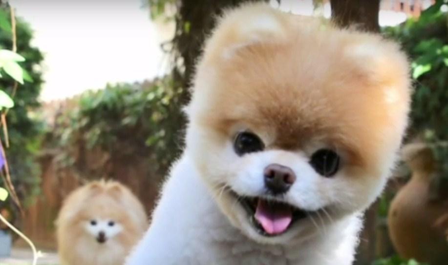 Dog Shelters Near Me Uk - Pets & Animals | The Humane Society