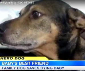Rescue Dog Duke Saves Dying Baby