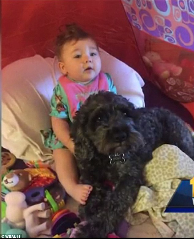 dogs saves life of a little girl