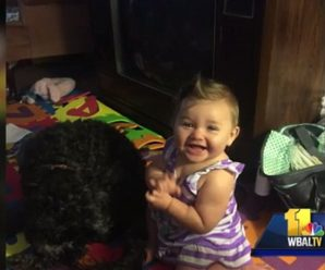 Dog dies saving the life of little girl in the house fire