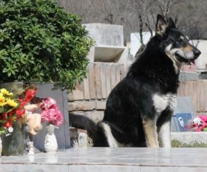 Dog lives by His Master's Grave For Six Years