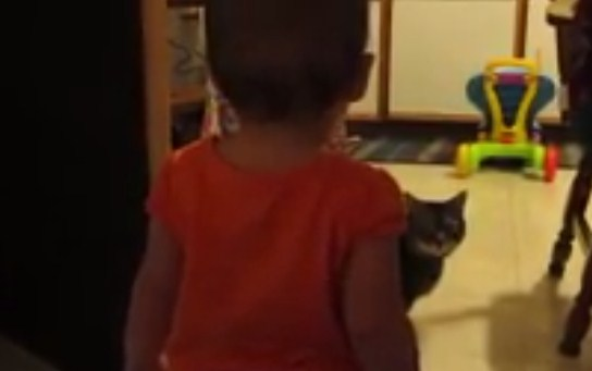 baby talks cat