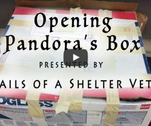 A Box Was Left At The Shelter, And The Smell Was Horrible. So They Opened It…