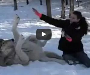 GIANT Wolf Plops Down Beside Her, But Watch What Happens