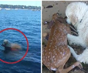 Dog saves baby deer drowning
