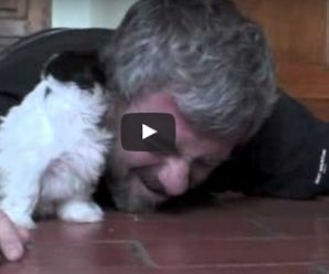 Man drops down to the floor next to his puppy. Get ready to see their amazing interaction