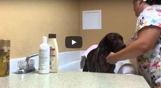 woof pet rescue