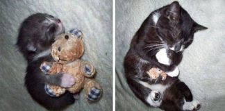 10+ Before And After Photos Of Pets Growing Up With Their Toys