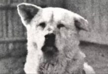 The Story Of Hachikō, The Most Loyal Dog In The World