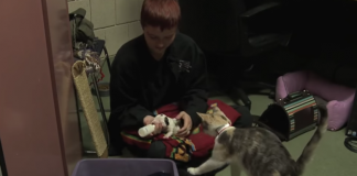 This Cat's Love Saved a Pit Bull Puppy and it was Absolutely Heartwarming