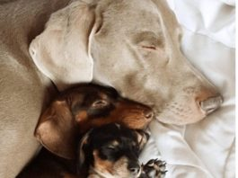 Inseparable Dogs