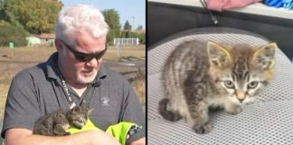 Man Stops For Kitten Trembling In Road, Then Realizes Her Feet Are GLUED To The Ground