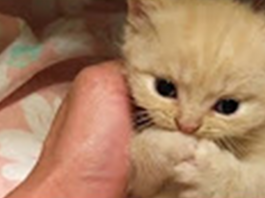 Cutest little baby kitten wants some attention, and it's enough to melt your heart to pieces!