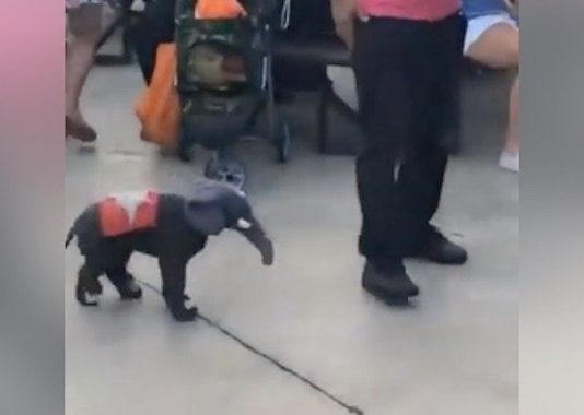 Dog Dressed As Toy Elephant Has Adorable Routine With Dad
