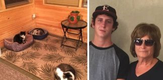Grandma Takes Care Of Stray 'Cat' - Son Dies Of Laughter When He Learns It's Not A Cat At All
