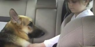 Girl Startled When Dog Lunges, Then Realizes He Sacrificed Himself For Her