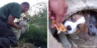 Man makes moving promise to dog who died after giving birth