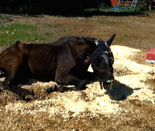 Horse Who Had Been Starved And Left To Die Makes Miraculous Recovery
