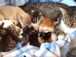 Cat Goes Great Lengths To Keep Tiny Puppy Alive