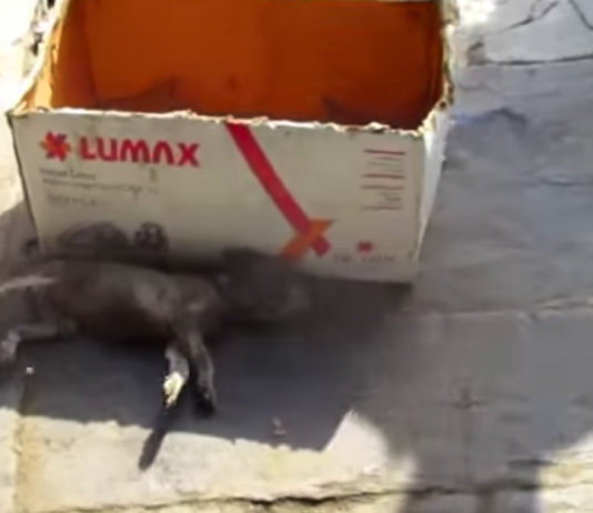 Rescuers Find Puppy Lying Beside A Box Near The Road Taking Its Final Breaths