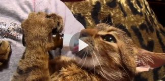 Kitten Starts Drinking From A Bottle — But Listen To The Sound She's Making