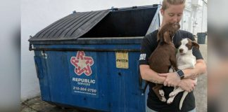 Sick, Bonded Puppies 'Thrown Away' In San Antonio Dumpster