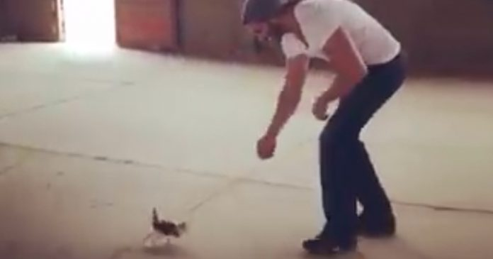 Man finds tiny kitten on the roadside, but after the kitten sees him, now watch his reaction