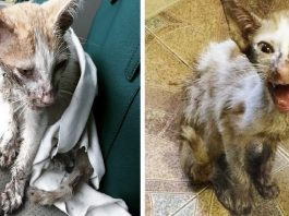 Women sees scraggly kitten wandering on side of road starving, struggling to survive so she stops her car