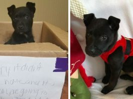 Boy Leaves Puppy In A Box Outside School, With A Heartbreaking Note Explaining Why