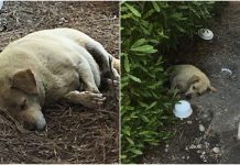 Dog found living in the dirt after his owners moved away and left him behind