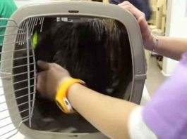Dog spends entire life in box – now watch when vets release him