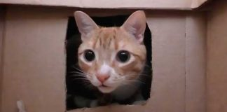 """Owner Builds Massive Maze For His Cats. 3 Millions Have Watched The """"Hilarious"""" Struggle That Follows"""