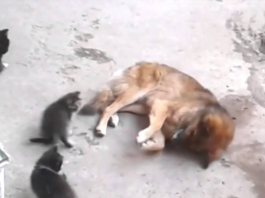 Cat Brings Adorable Surprises To Dog Who She Grew Up With and Their Friendship Will Warm Your Heart