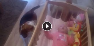 Puppy Sees His Baby Sister Crying And Knows Exactly What To Do To Calm Her Down