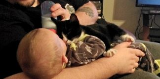 Man Saves Homeless Kitten, the Kitty Returns the Favor…