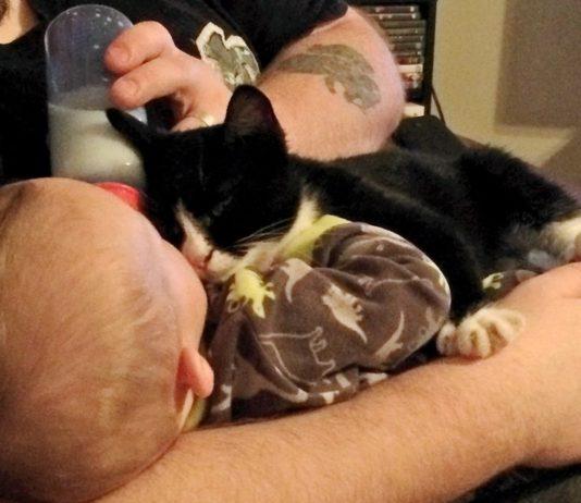 Man Saves Homeless Kitten, the Kitty Returns the Favor…