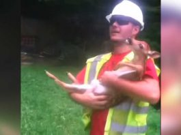Worker Saves Deer And Rubs His Belly. His Reaction When He Releases Him Has Internet In Stitches