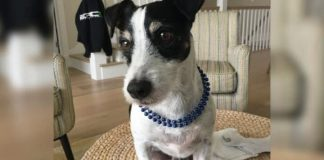Electrician rescues Zeus the kiteboarding dog from his kidnapper