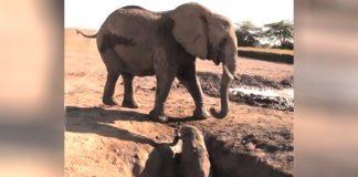 Elephant researcher