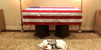 mission of service dogs