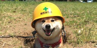 doggie extra credit