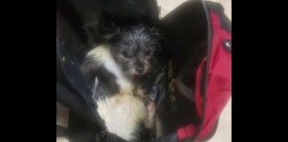 Tiny pup abandoned inside backpack in freezing cold, found alive on road by Good Samaritan