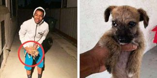 Boy steps outside to find the tiniest shivering puppy at his doorstep