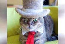 Japanese Artist Creates Hilarious And Impressive Articles Of Clothing For His Cats
