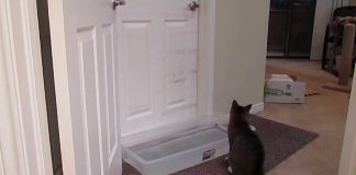 Cat Outsmarts Owner's Plan To Prevent Him From Waking Him