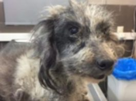 Matted Dog Rescue
